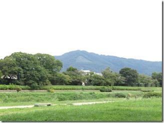 hasegawa (17)