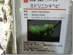 kyotodoubutuen (24)